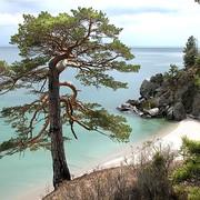 Pine-tree Pine-tree on My World.